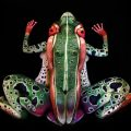 frog-johannes-stoetter_feat