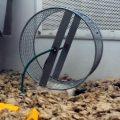 hamster-macht-was-falsch_feat
