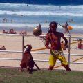 soccer-dog-bondi-australien_feat