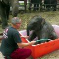 baby-elefant-baden_feat