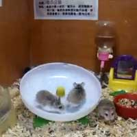 crazy-hamsters_feat