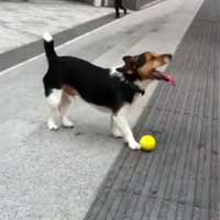 dog-plays-fetch-with-himself_feat