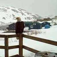 eagle-fox-cat_feat