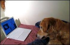 hund-computer-katze_big