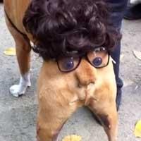 hund-halloween-arschgesicht_feat