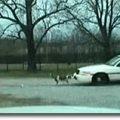 hunde-polizeiauto_big